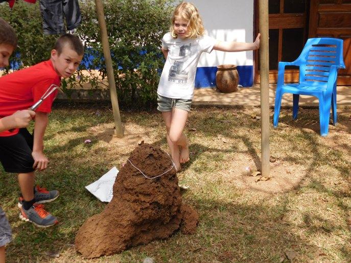 Termites 3.4b